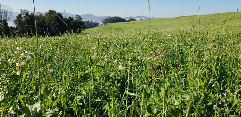 Uma boa cobertura retém umidade no solo e reduz os damos em caso de seca